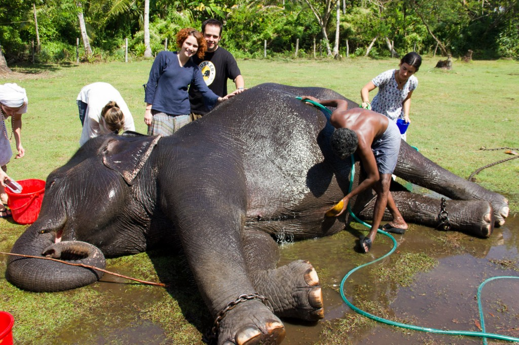 Lakshmi, a elefoa, sendo banhada por um monte de turista babão