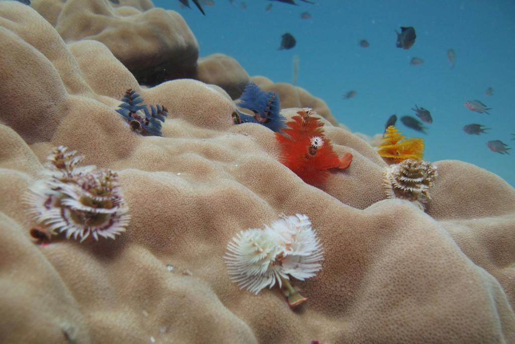 Árvore de Natal entre os corais