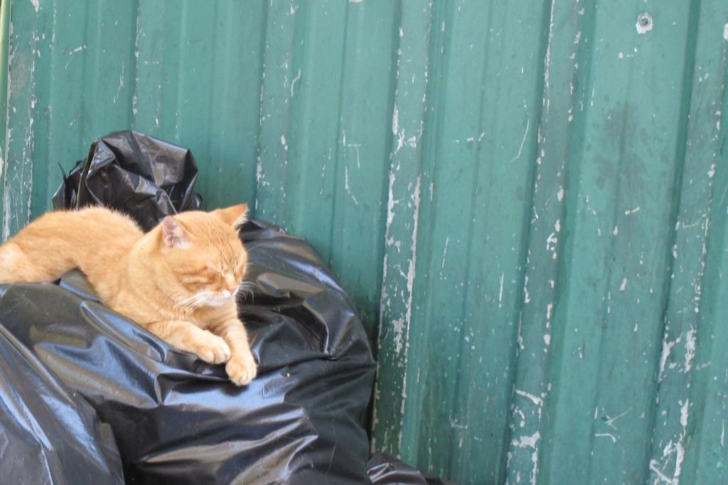 Garfield em Istanbul