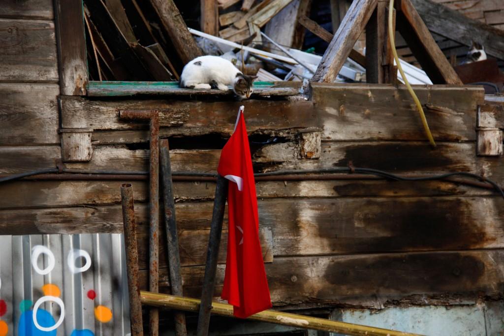 Gato observando a bandeira