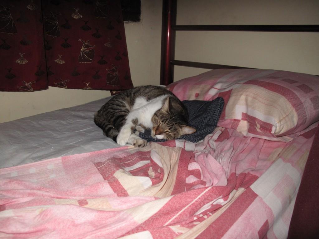 Gato na cama do Igor
