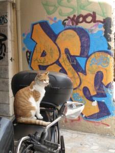 Os gatos de Istanbul