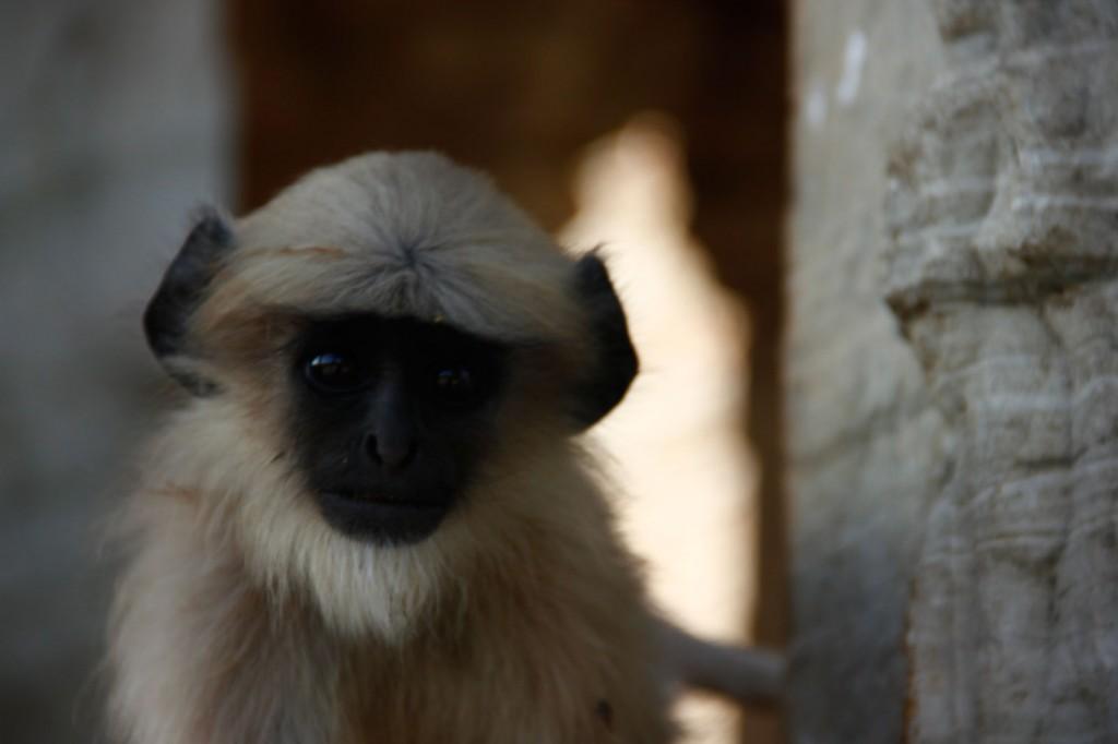 Macaco pousando para a foto