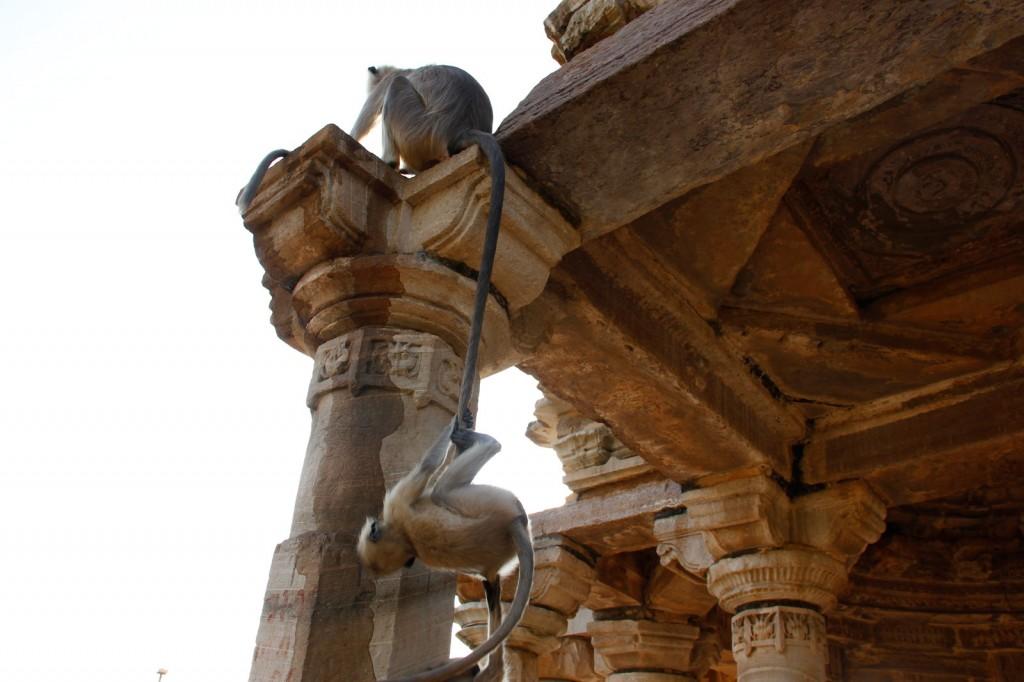 Macaco brincando de pendurar no robo do outro