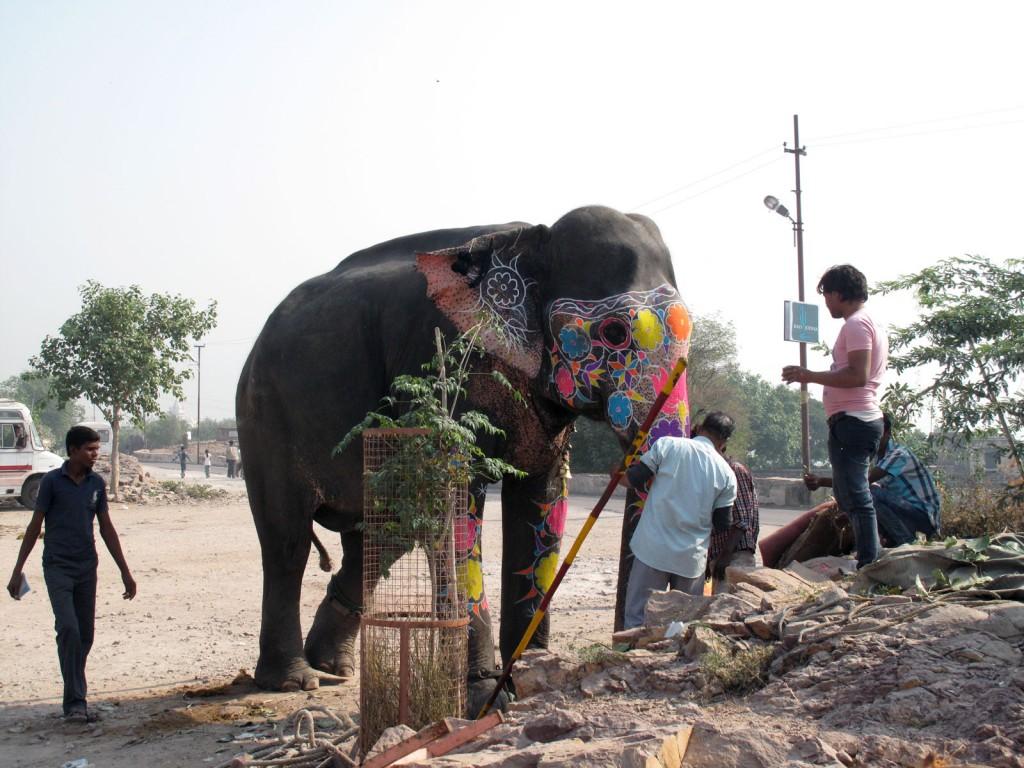 A primeira visão do elefante