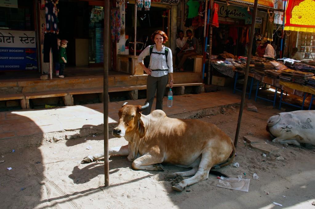 Vaca enorme no meio de Jasalmer