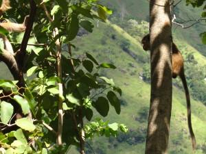 Lembranças do Sri Lanka