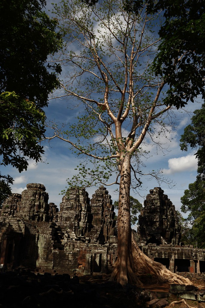 Árvore dourada no Templo Ta Phrom