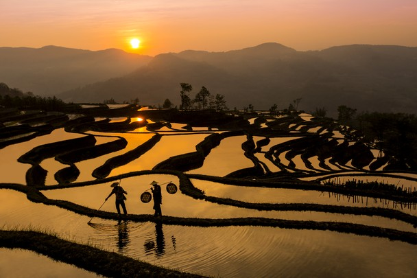 Fishing on the Rice Terraces. Foto Shawn Talbot