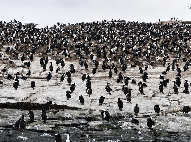 Ushuaia Pinguins. Foto:  Valentina Gabusi